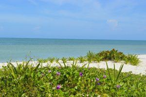 Playas de Celestún