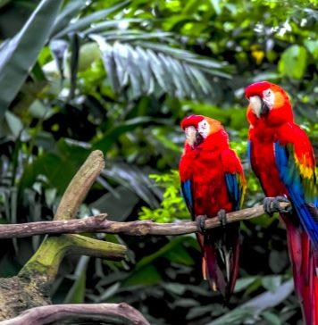 Atractivos de Chiapas