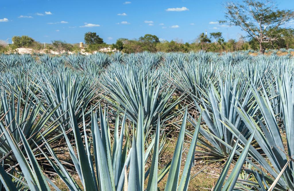Oaxaca Ecoturismo para Viajero Zero Waste