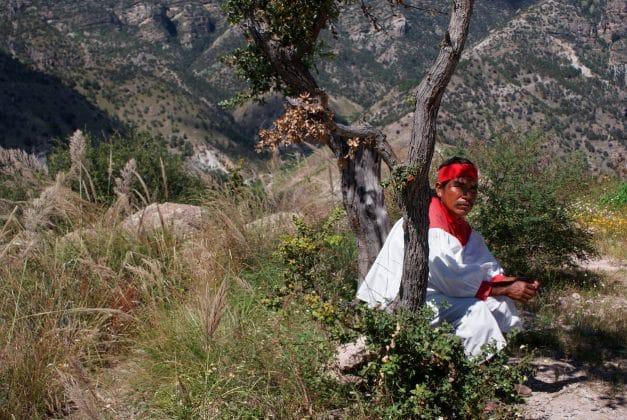 Barrancas del Cobre Tren Chepe Arbol Tarahumara
